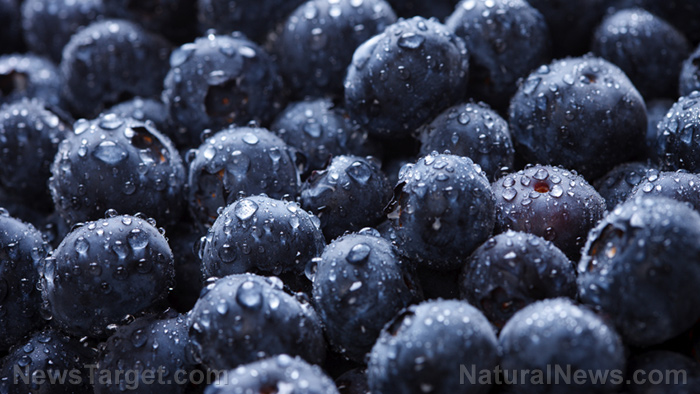 Eat more blueberries to protect yourself from bacterial infections