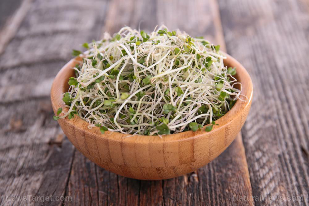 Sprouting 101: What it is, and how it's great for brain health