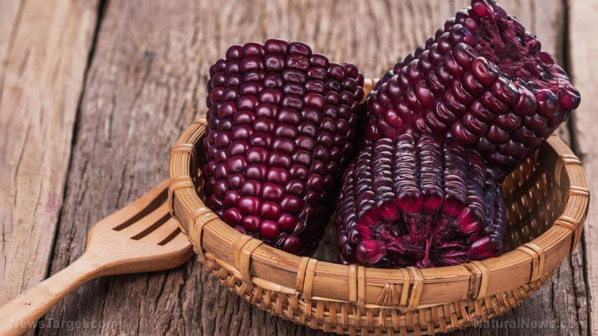 Purple corn is an ancient superfood that can fight diabetes and obesity