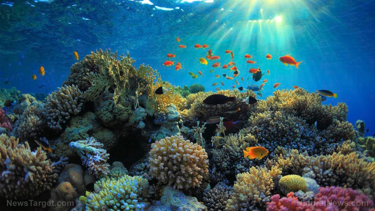 Hope for reef fish: Ocean currents bring food to fish populations in damaged coral reefs