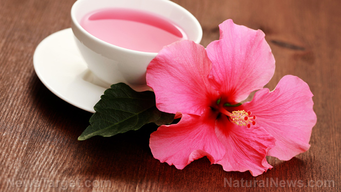 "Hibiscus flowers are a ""death sentence"" for breast cancer cells, says research"
