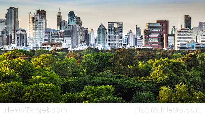 Trees in cities grow fast but die young, unlike rural trees: Existing trees must be preserved and cared for, advise researchers